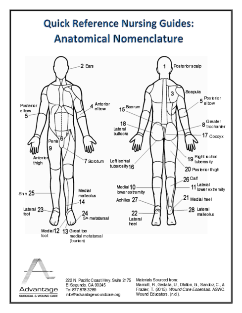 Anatomical Nomenclature
